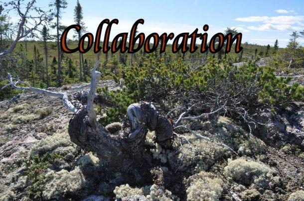 collaboration-pic