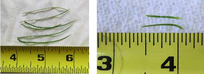 needle-compare